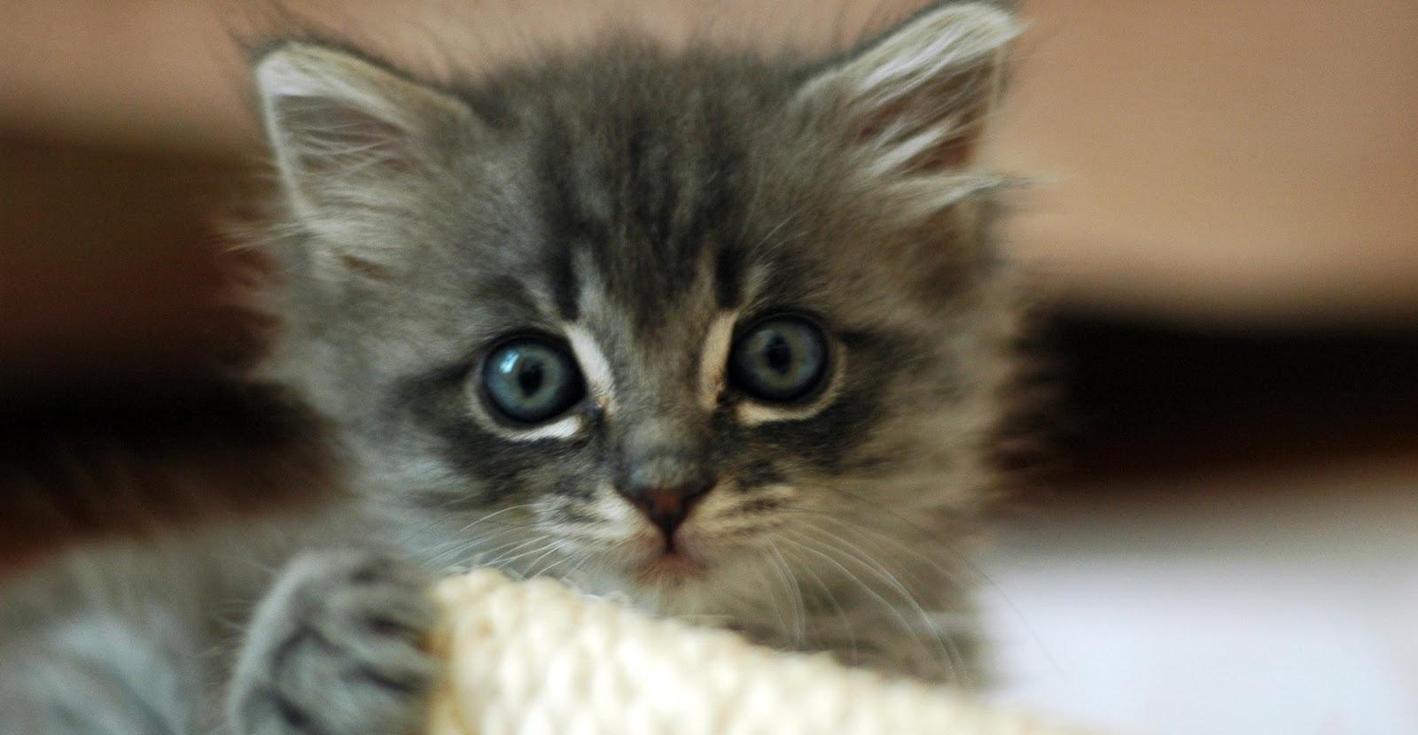 Cute Cat Videos-663165-edited